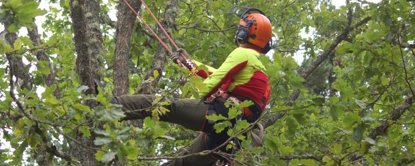Suure puu hooldus