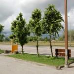 Puude vormilõikus