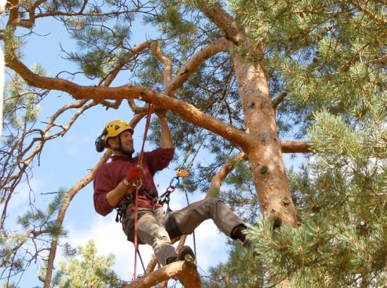 puu hooldus Nõmmel