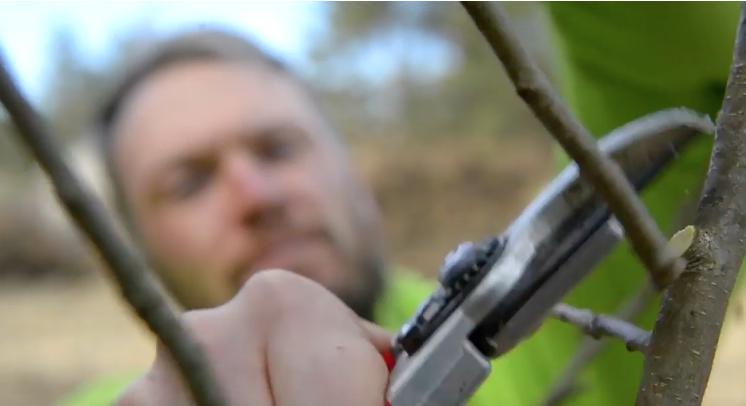 õunapuu lõikamine